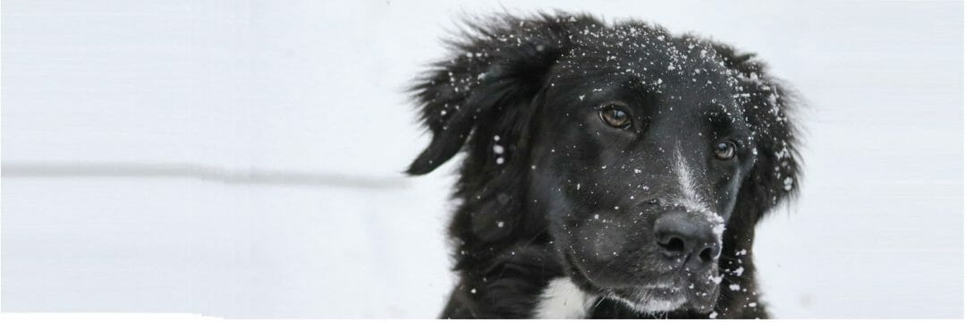 Wintersport hond checklist